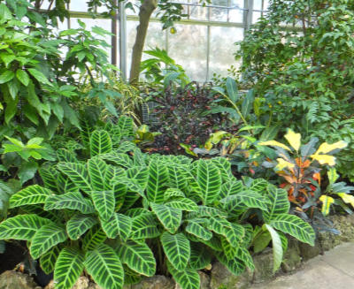 OTRA Plant Sale and Coffee Morning